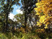 Chicago Foliage7F