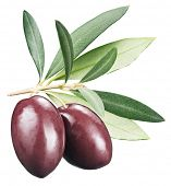 foto of kalamata olives  - Kalamata olives with leaves on a white background - JPG