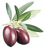 stock photo of kalamata olives  - Kalamata olives with leaves on a white background - JPG