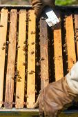 pic of smoker  - farmer with bee smoker checking a hive with bees - JPG
