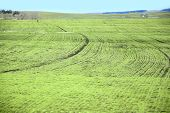 stock photo of early spring  - isolated arable land after the melting snow in early spring - JPG