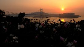picture of hong kong bridge  - Hong Kong bridge - JPG