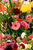 Beautiful Assortment Of Colorful Wild Flowers On Display