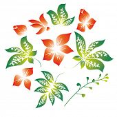 image of chloroplast  - A set of flowers and leaves  - JPG