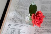 psalm 23 and a rose