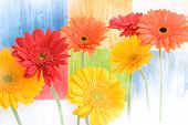 colorful daisies on cheerful coloured background