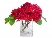 red dahlia flowers in a vase with greenery & river rocks - white isolation