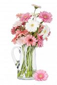 vase of pink gerber daisies - isolated on white background