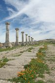 Row Of Ancient Roman Columns In Ruins City Volubilis poster