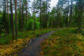 Oulanka National Park, Finland poster