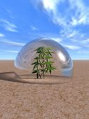 Plant isolated in glass sphere - 3d scene.