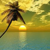picture of tropical island  - Sunset coconut palm tree on ocean coast - JPG