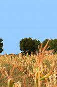 Dried Up Fields