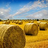 Golden Hay Bales in the countryside on a perfect sunny day