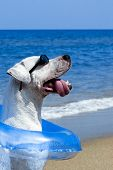 picture of beach party  - Dog wearing sunglasses and blue float sitting on a tropical beach - JPG