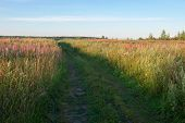 Field Grass Trail. Field Grass Trail On Colorful Background. Natural Green Grass Field Background. G poster