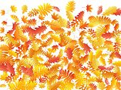Oak, Maple, Wild Ash Rowan Leaves Vector, Autumn Foliage On White Background. Red Orange Gold Sorb D poster