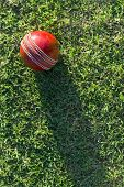 Cricket Ball On Grass