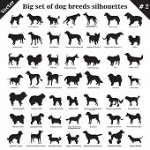 Big Set Of 49 Different Dogs, Hounds, Working, Shepherd, Terrier, Companion, Hunting. Vector Set Of  poster
