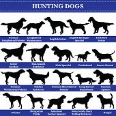 Set Of 20 Hunting Dogs. Vector Set Of Hunting Breeds Dogs Standing In Profile. Isolated Dogs Breed S poster