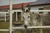 Donkey Breeding #2 poster