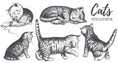 Collection Of Cats Hand Drawing. The Cat Plays, Sleeps, Sits, Runs, Curiosity. Pose Kitten Vector Il poster