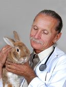 Veterinarian Holding Rabbit