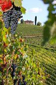 Chianti-Weinberg-Landschaft in der Toskana, Italien