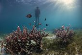 diver and the hard coral