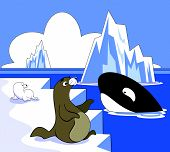 Seal and Killer Whale