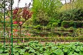 Water Garden of Giverny