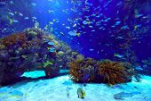 underwater image of coral reef and tropical fishes