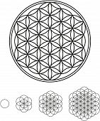 Flower Of Life Development Designs