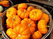Bucket of Mini Pumpkins