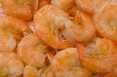 Cooked Shrimp poster