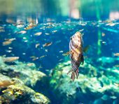fish under water