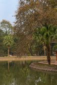 Urban Garden In Hanoi