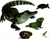 foto of tuatara  - It is illustration of several wild reptiles - JPG
