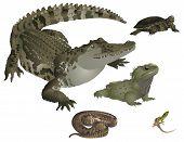 Reptiles set
