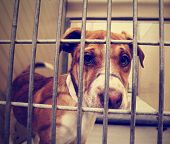 a stray dog at the pound or shelter done with a retro vintage instagram filter
