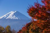 Mt. Fuji With Red Autumn. Kawaguchi-ko. Japan