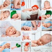 Collage of a sweet newborn babies photos