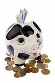pic of cash cow  - Piggy bank with black and white cow spots looking upwards and standing in a variety of Euro coins with banknotes in its slot isolated in white background - JPG