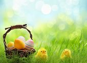 stock photo of chicken  - Yellow Easter chicks and basket of Easter eggs in a field - JPG
