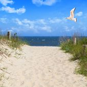Seagull Flying In Sky At Beach
