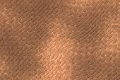 image of lizard skin  - Reptile skin image of a nice skin background - JPG