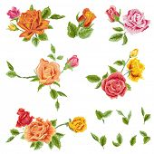 Watercolor Roses Set - floral background - in vector