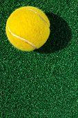 tennis ball on grass