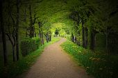 Mystical Path Through A Dark Forest With Spotlight