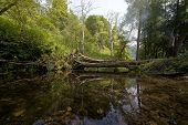 Forest stream and broken tree